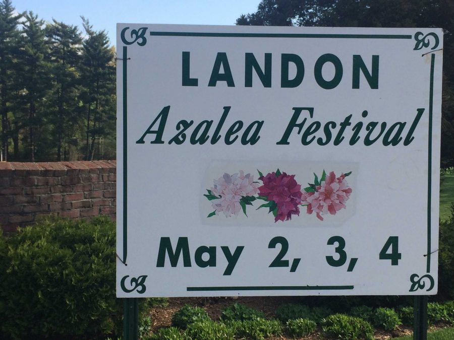 The azalea festival, held at Landon, is taking place this weekend.  Photo by Julia Pearl-Schwartz.