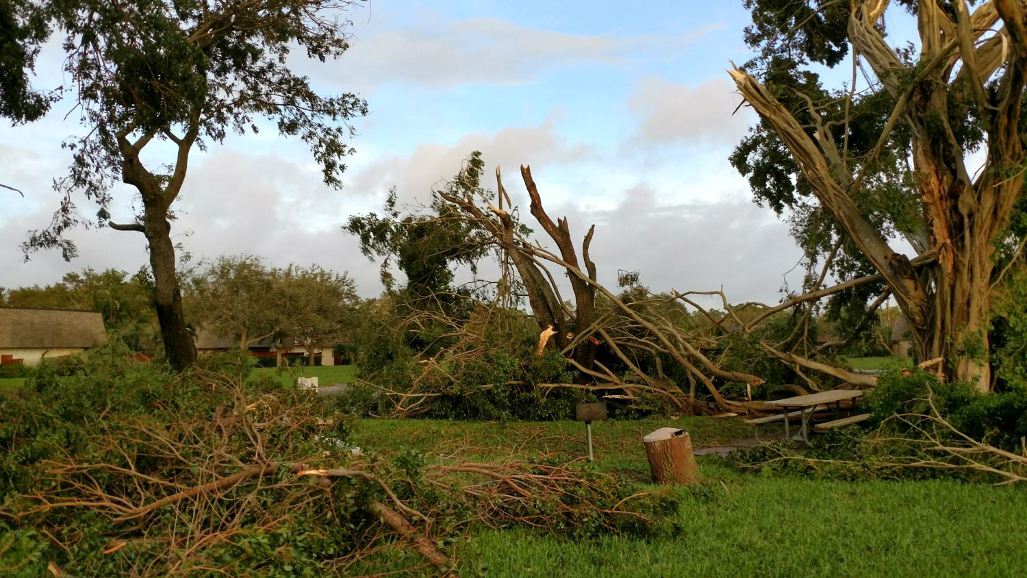 Fallen trees scatter a neighborhood in De;ray Beach, Florida. Hurricane Harvey, Irma and Maria all led to widespread tree damage, power outages and flooding. Photo courtesy Jill Kittredge.