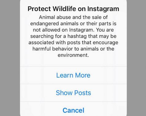 Instagram adds animal abuse warnings on selfies with animals