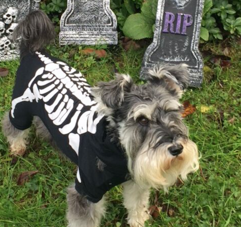 Fall/Halloween Photo Contest: Best pet costume!