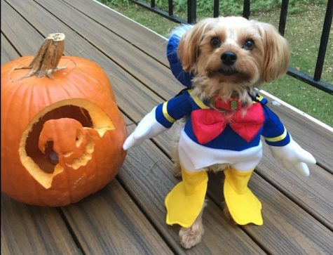 Halloween pet photo contest winners