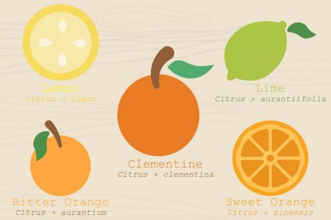 Ode to the clementine