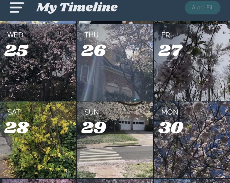 %22A+screenshot+of+my+1+Second+Everyday+timeline+from+this+spring.+Upon+recognizing+that+nature+could+enliven+my+montage%2C+I+took+countless+clips+of+vibrant+flowers.%22